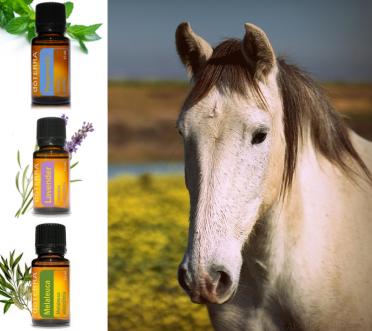 Workshop: Essentiële oliën voor paarden
