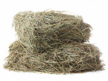 soft_green_hay-1